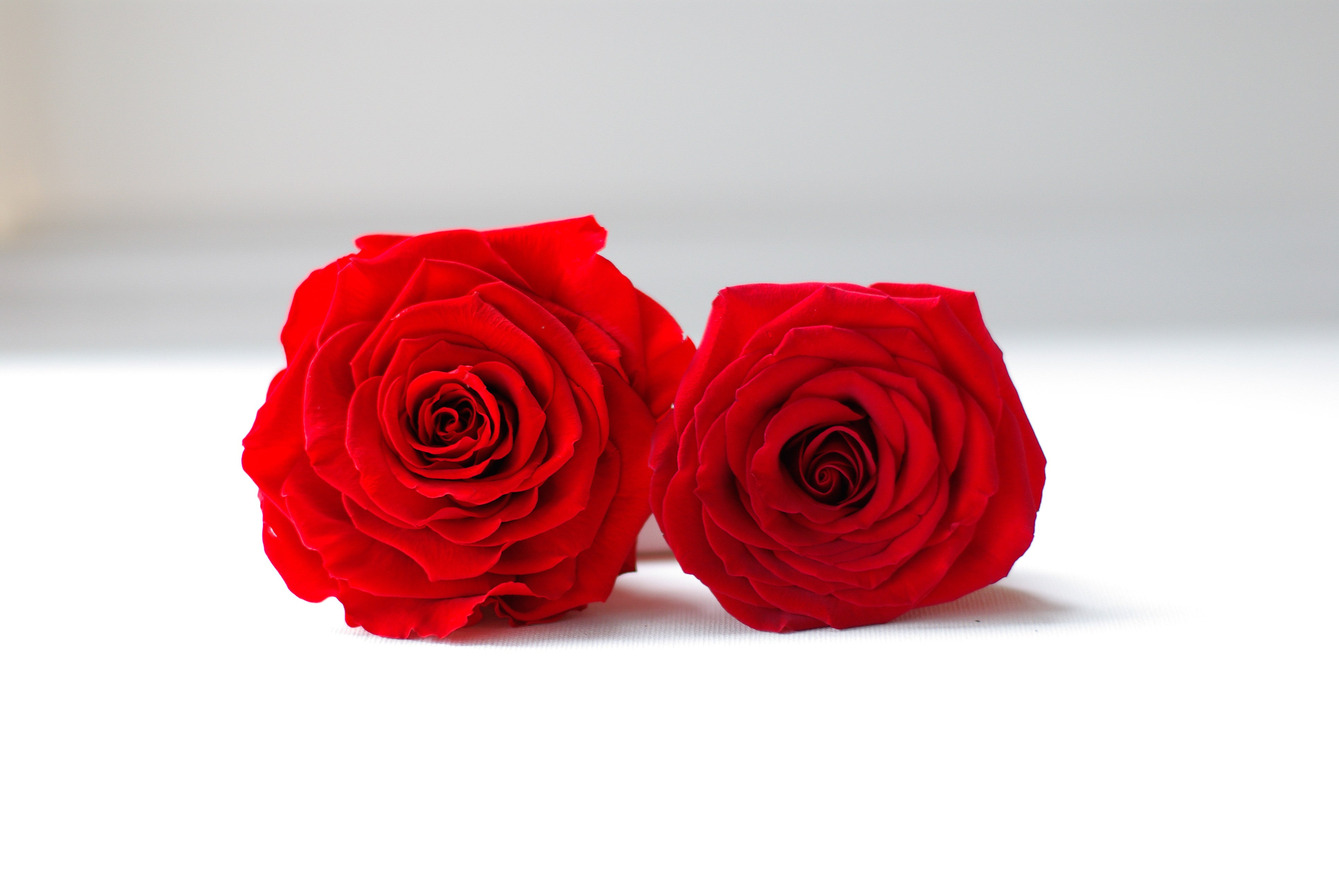 Real roses preserved to last for years!