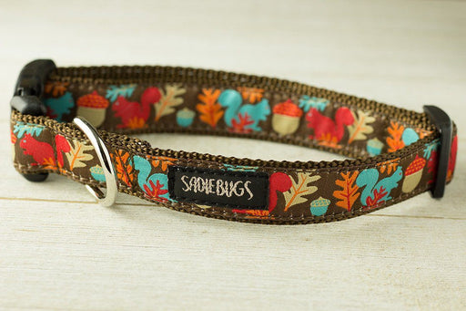 Squrriel dog collar, Fall dog collar