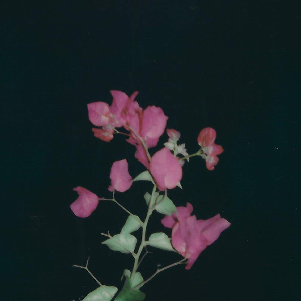 Untitled (Flore), Polaroid  by  Untitled (Flore) Tappan