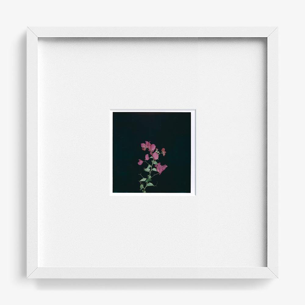 Untitled (Flore)