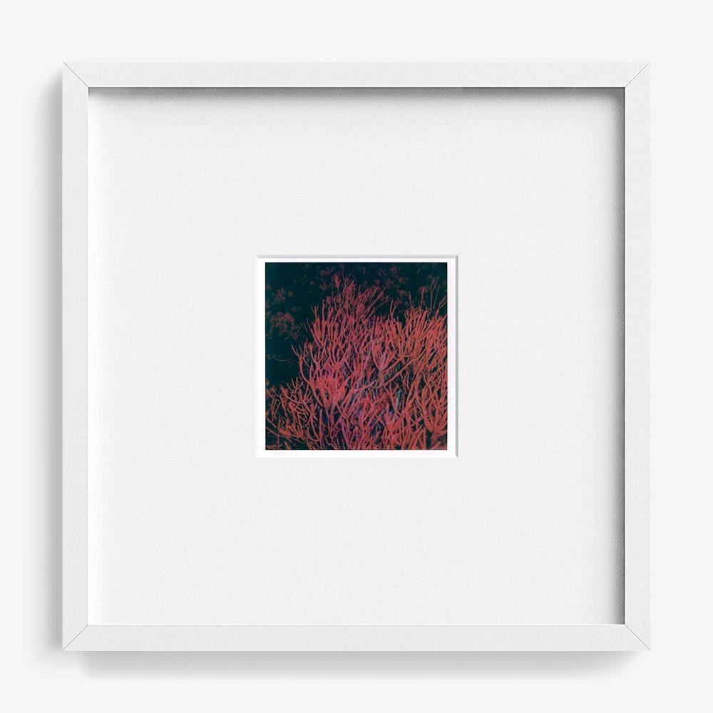 Untitled (Kindred), Polaroid  by  Untitled (Kindred) Tappan