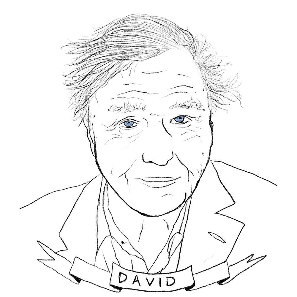 David Attenborough, Print  by  David Attenborough Tappan