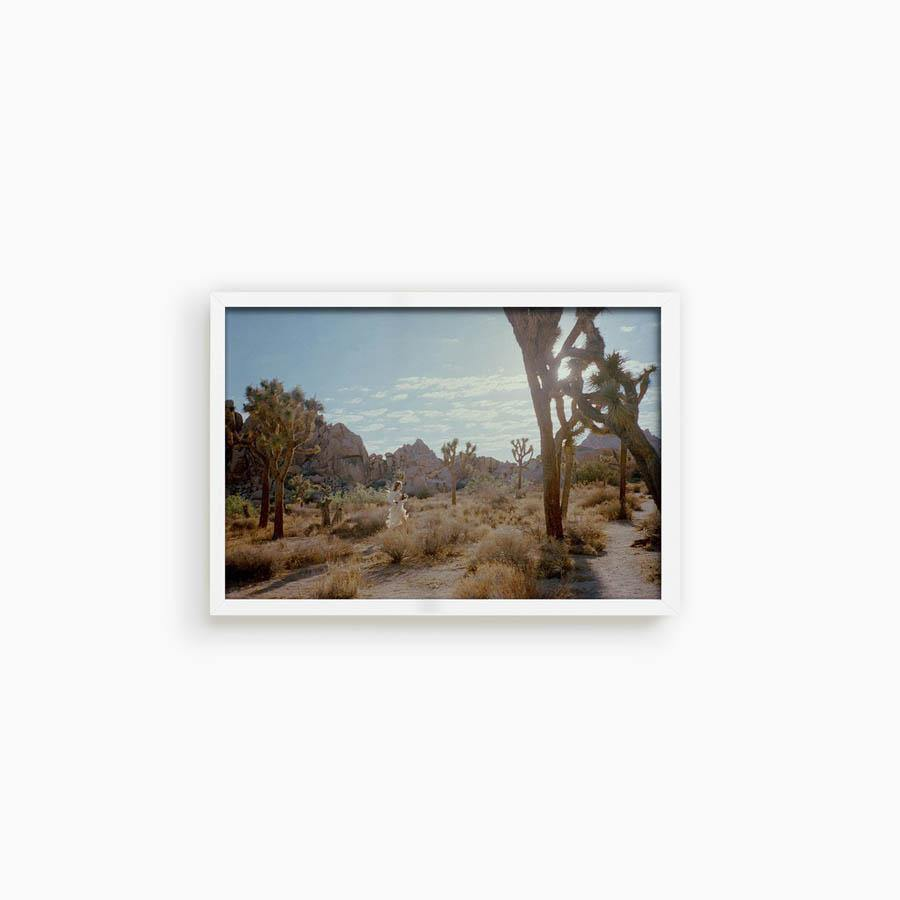 Untitled VIII (Joshua Tree)