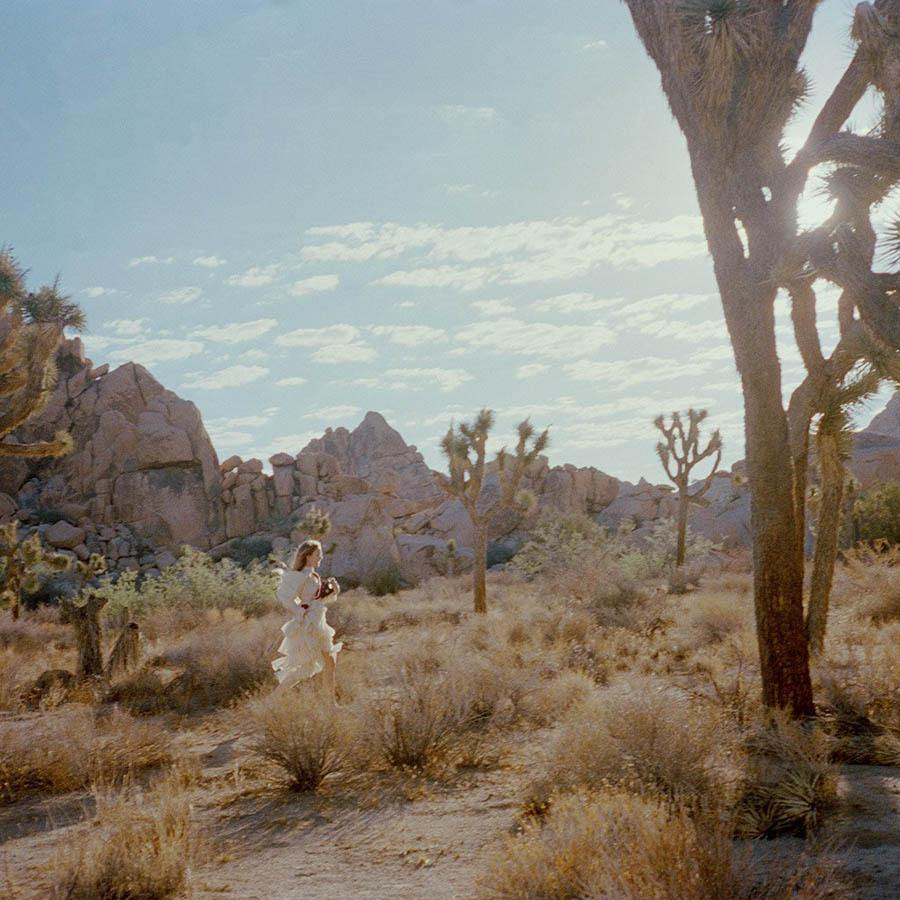 Untitled VIII (Joshua Tree), Photograph  by  Untitled VIII (Joshua Tree) Tappan