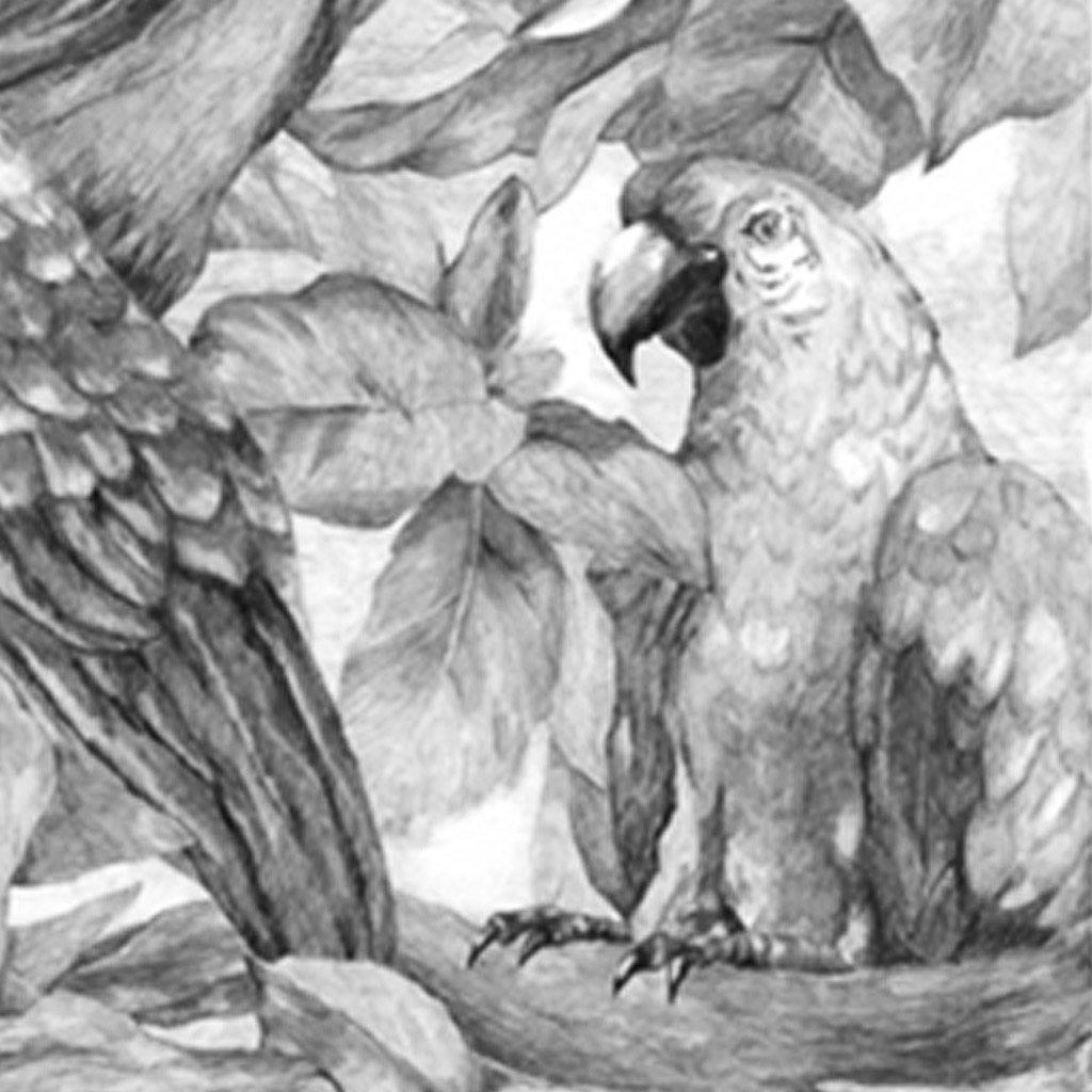 Parrot, Drawing  by  Parrot Tappan