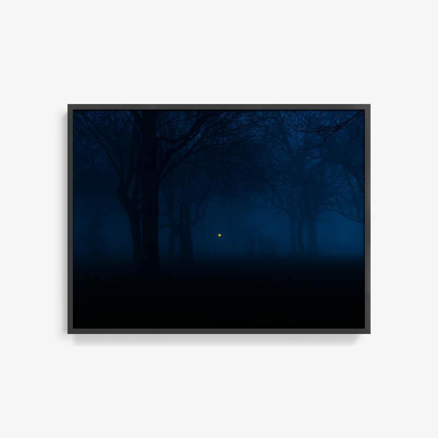 Untitled (Night Forest)