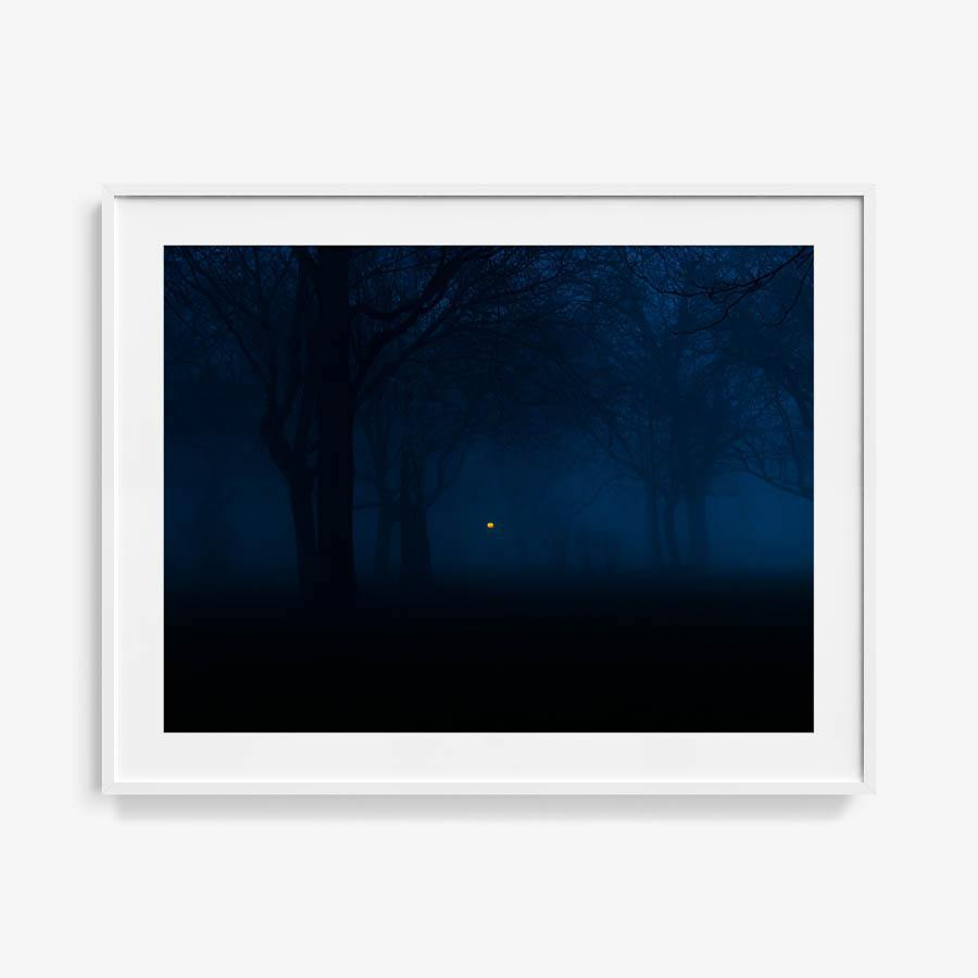 Untitled (Night Forest), Photography  by  Untitled (Night Forest) Tappan