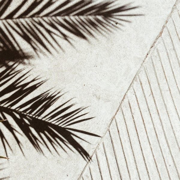 Palm Shadow 1