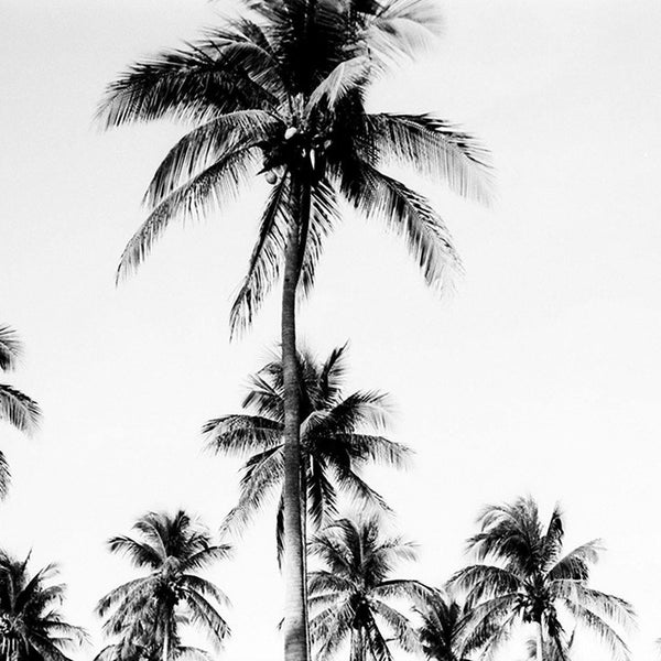 Endless Palms (Mainland Mexico)