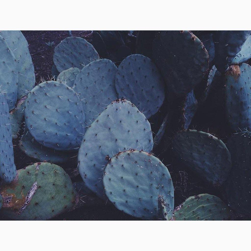 Prickly Pear Paddles Procreate Patiently