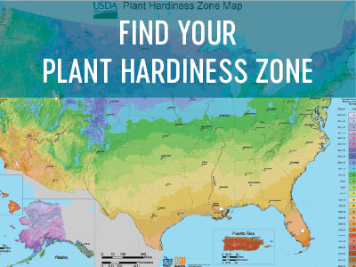 Find your plant hardiness zone