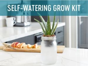 self-watering grow kit