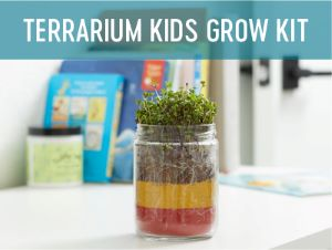 terrarium kids grow kit