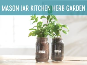 garden in a jar faq