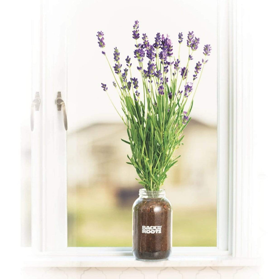 Organic Lavender Windowsill Planter