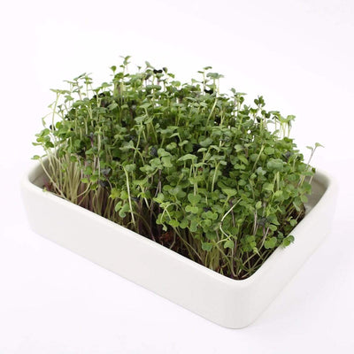Ceramic Microgreen Grow Tray (no seeds, just planter tray)