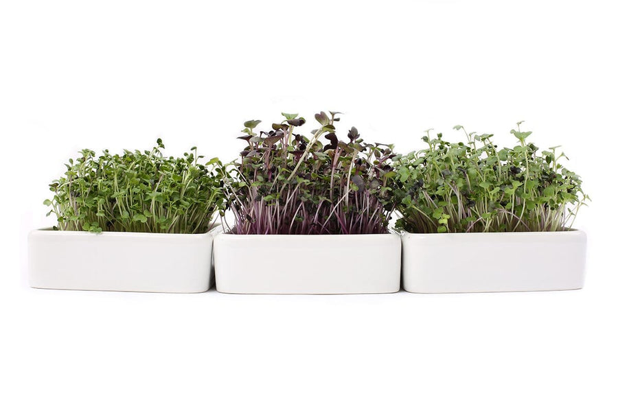 Ceramic Microgreens Planter, 3-Pack