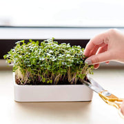 Microgreens Grow Kit with Ceramic Planter