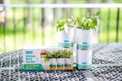 Kitchen Herb Garden - Basil, Mint, Cilantro 3-Pack 🌿