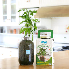 Organic Shishito Pepper Self Watering Planter - Back to the Roots