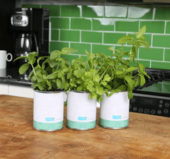 Kitchen Herb Garden - Basil, Mint, Cilantro 3-Pack 🌿 DAILY DEAL
