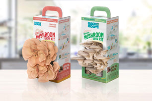 MUSHROOM GROW KIT (2 PACK) - *New* VARIETY EDITION (Pink + Pearl Oyster Mushrooms) - Back to the Roots