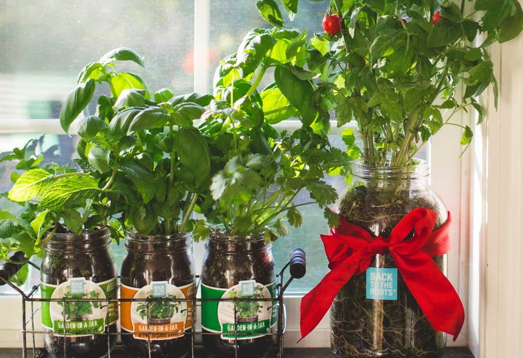 The Mason Jar Gift Set Indoor Gardening Kit Grow Herbs In A Jar Back To The Roots