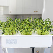 Microgreen Seed Packets - Radish Microgreen Seeds - Back to the Roots