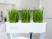 Microgreen Seed Packets - Wheatgrass Seeds - Back to the Roots