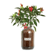 Mason Jar Holiday Gift Set - Herb & Veggie Planters 3 Pack