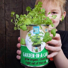 Kitchen Herb Garden - Basil, Mint, Cilantro 3-Pack