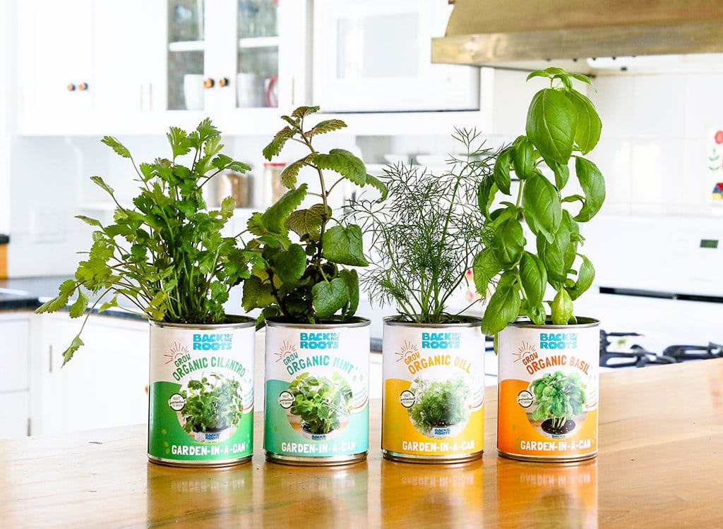 The Healthiest Indoor Herb Garden Kit | Garden-in-a-Can | Back to ...