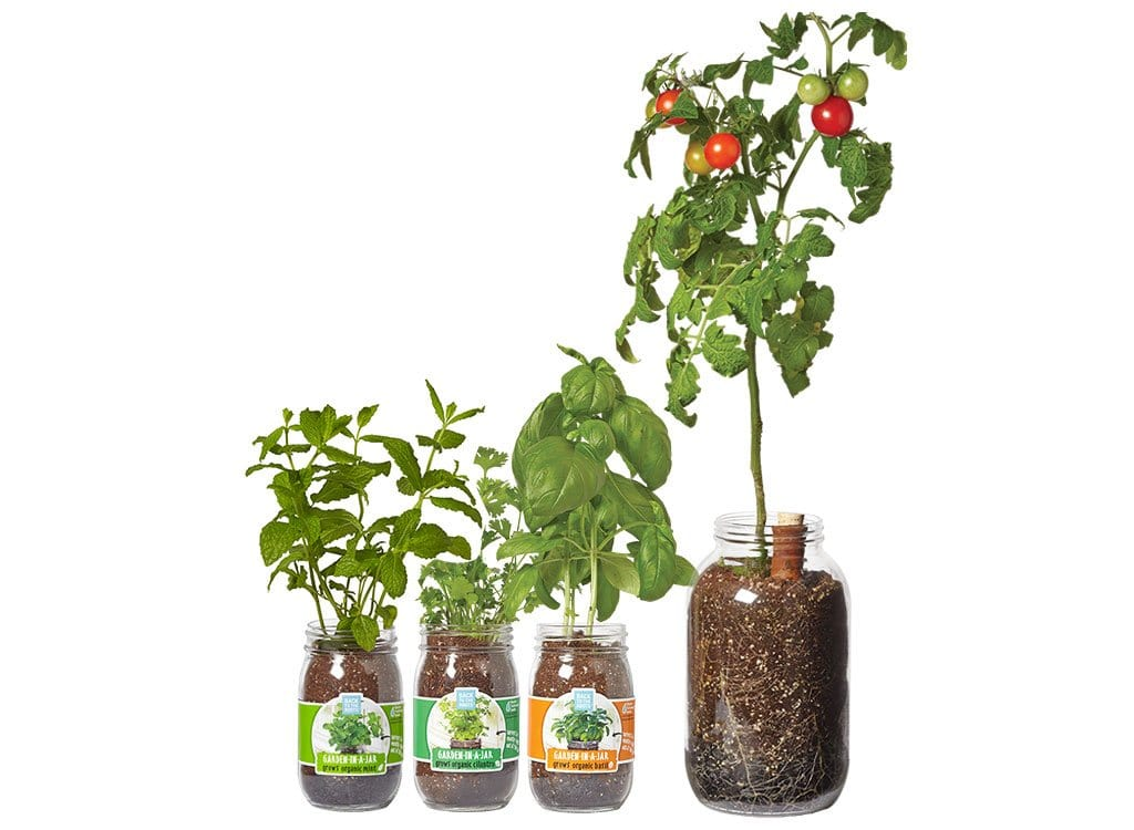 Indoor garden kits an easy fun way to start your indoor garden back to the roots mason jar gift set indoor gardening kit herb garden in a jars workwithnaturefo