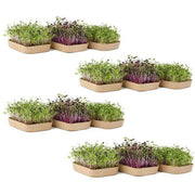 Organic Microgreens Kit, Bulk Saver 6-Pack (includes 12 grows!) 🌱