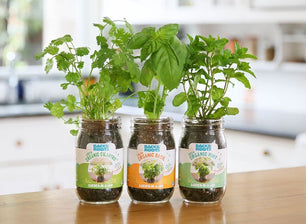 Wonderful Back To The Roots Garden In A Jar Indoor Gardening Kit Herb Growing Kit  Grow Herbs
