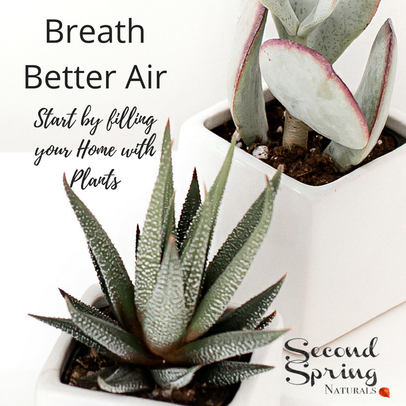 Breathe Better Air|Start with Plants and Go From There