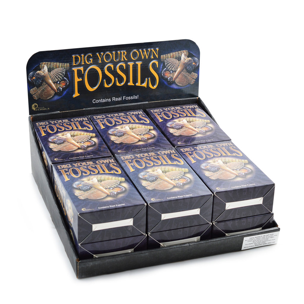 DIG YOUR OWN FOSSILS PACK - by BRITISH FOSSILS