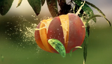 Peach Blast - @VaporRelated - Ejuice - Cheap Ejuice - low price ejuice - cheap premium ejuice