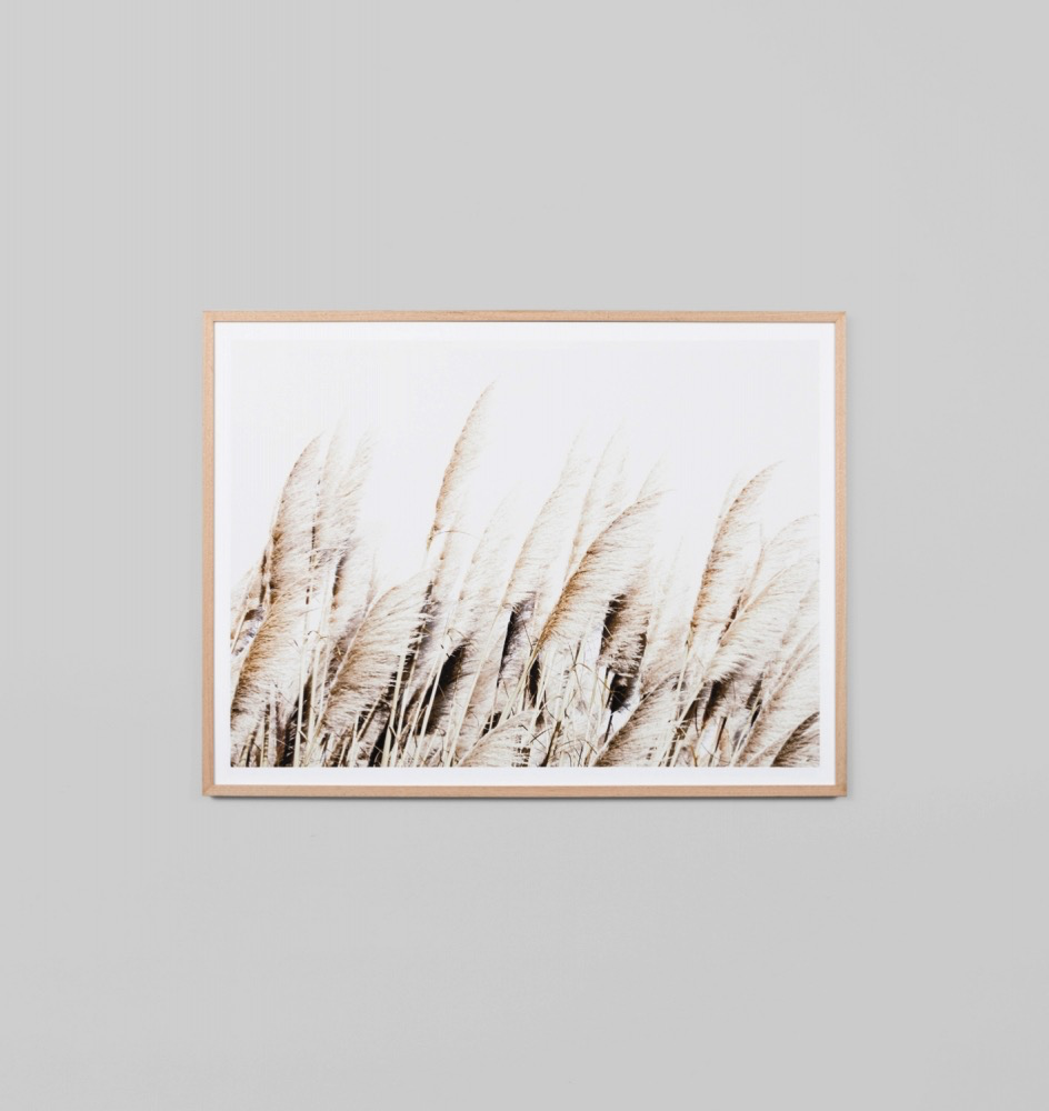 Pampas Breeze Artwork