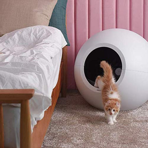 cat coming out of the litter robot