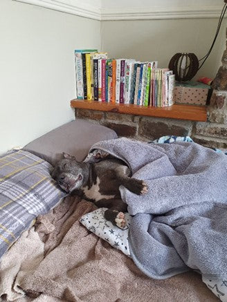 funny image of dog in owners bed
