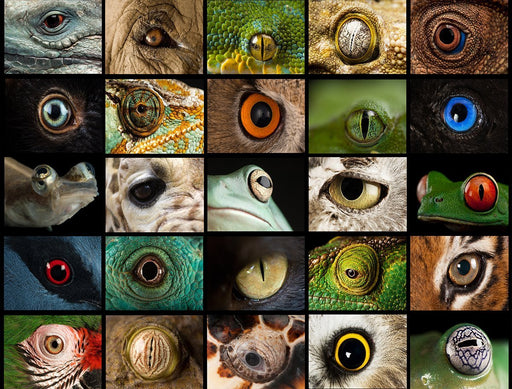 National Geographic Photo Ark – Animal Eyes 1000 Piece Nature Jigsaw Puzzle - All Jigsaw Puzzles