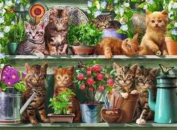 Cats on the Shelf, 500 Piece Jigsaw Puzzle