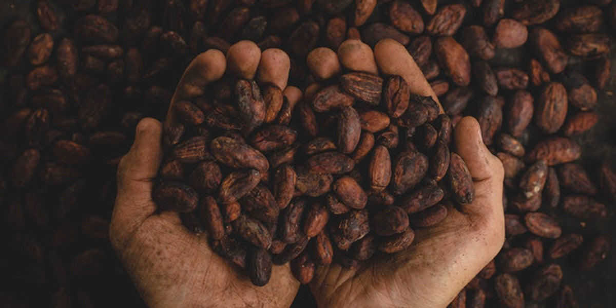 Cocoa vs cacao health benefits nutrition