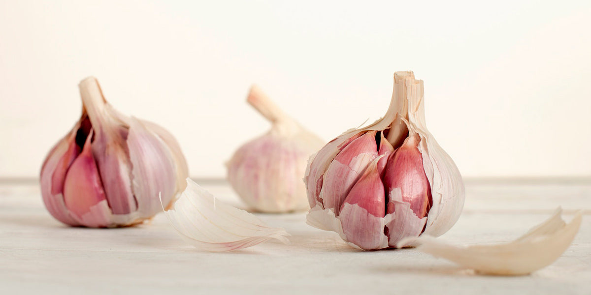 garlic superfood health nutrition