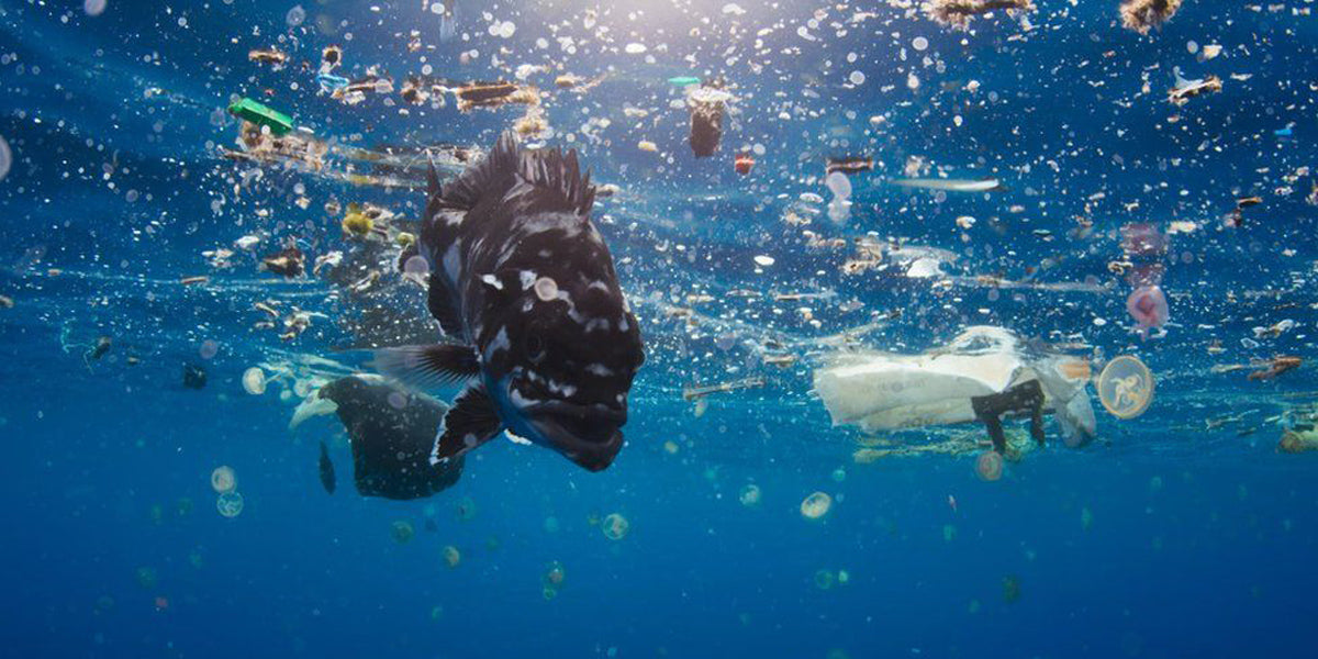 plastic pollution oceans waste