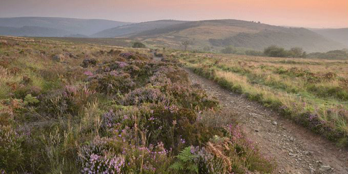 The Quantock Hills running destination