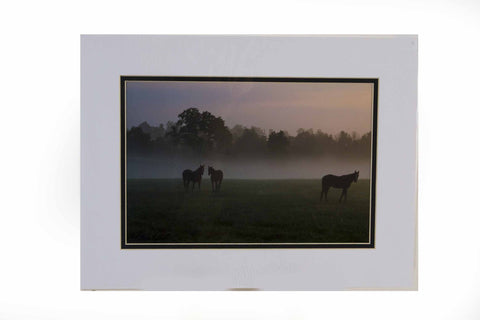 """Yearlings in the Morning Mist"""