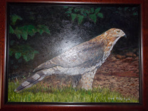 Hawk on the ground by Lloyd Alvis Agee