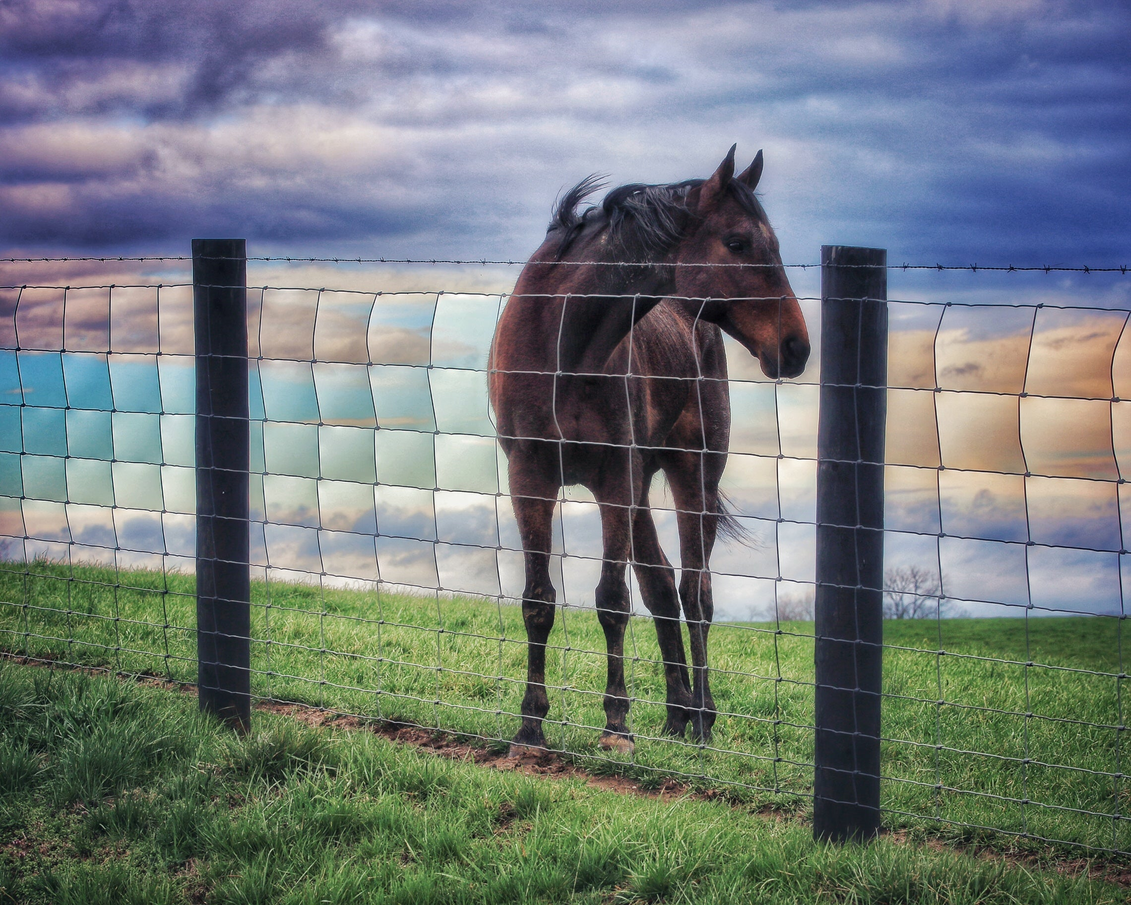 """Quilted Horse"" by Robert Ellis"